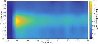graphene system could aid in u0027seeing u0027 brain waves berkeley lab