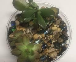 houseplants succulents classes st louis escape u0026 unwind