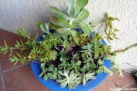Large Succulent Planter Planting My Medley Of Succulent Plants U0026 Cuttings