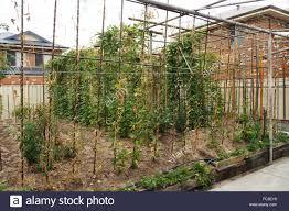 Urban Veggie Garden - urban vegetable garden in inner city perth stock photo royalty