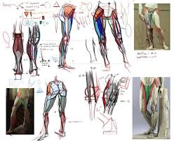 Human Anatomy Reference 316 Best Character Anatomy Legs Images On Pinterest Art