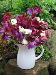 wedding flowers ayrshire 105 best grown cut flowers foliage images on