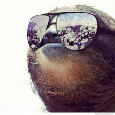 The Sloth Meme - the best sloth memes home facebook