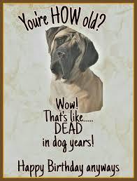 Happy Birthday Meme Dog - mastiff birthday card mastiff englishmastiff bigdog