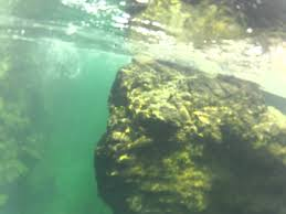 Oregon snorkeling images Snorkeling the illinois river in oregon jpg