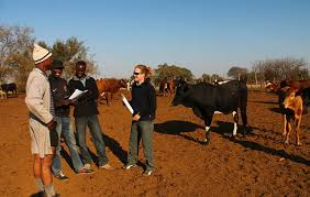 Montana travel abroad images Study abroad course in africa wildlife biology university of jpg