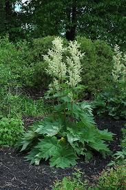 59 best big leaf plants for zones 4 5 images on big