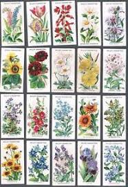 1910 wills u0027s cigarettes old english garden flowers tobacco cards
