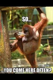 Memes Funniest - 50 best animal memes funniest animal memes