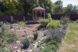from backyard pool to native oasis the sacramento bee