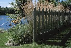 perennial decorative grasses home guides sf gate