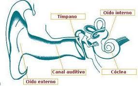 significado de imagenes sensoriales wikipedia organos sensoriales aprendiendo juntos