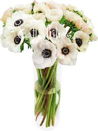 anemones flowers white blush anemone flowers wholesale anemones for weddings and