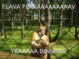 Bboy Meme - bboy kangaroo