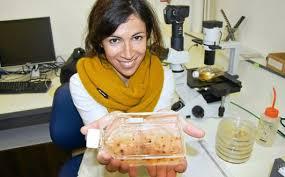 sexe dans la cuisine sexe des algues des gènes et du plaisir portraits letelegramme fr