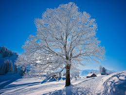 photo collection keywords white tree wallpapers