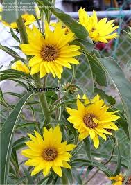 sunflower delivery 9 best flowers delivery in dubai by local florist images on