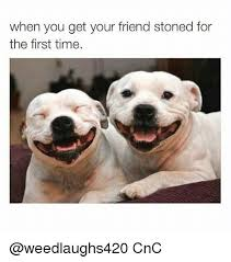 Stoned Dogs Meme - when you get your friend stoned for the first time cnc meme on me me