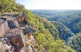 blue mountains native plants tunnel view lookout learn more nsw national parks