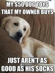 Funny Meme Dog - first world dog problems meme 5 dump a day