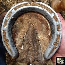 handmade horseshoes fran jurga s hoof news from hoofcare lameness badminton s