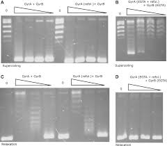 the role of ca 2 in the activity of mycobacterium tuberculosis