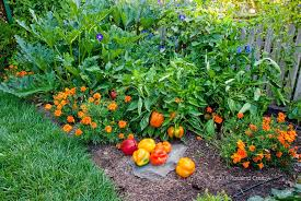 trend organic plant food for vegetable garden by dining table