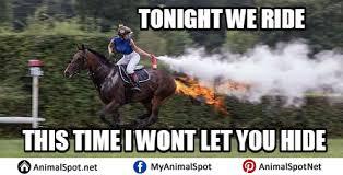 Horse Riding Meme - horse memes