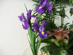 Vase With Irises Kelly Bar Organized By Pane Project