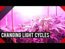Light Cycle For Weed 61 Best Mary Jane U003c3 Images On Pinterest Smoke Weed Medical
