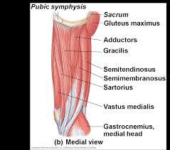 Human Anatomy Flashcards Human Anatomy Muscle Flashcards Human Anatomy Charts