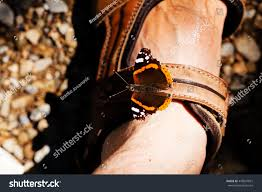 butterfly admiral on leg note stock photo 443837821
