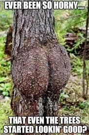 Tree Meme - sexy tree meme generator imgflip