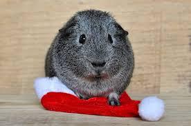 where to meet santa claus in devon this christmas christmas