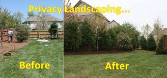 Small Backyard Privacy Ideas Privacy Landscape Before U0026 After Photos Gardening Pinterest