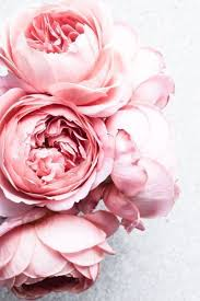 flowers roses pictures of pink roses flowers best 25 pink flower ideas on