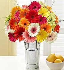 gerbera daisies daisies gerbera daisies bouquets 1800flowers