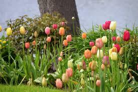 gardening di stefano landscaping