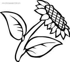 Sunflower Color Page Sunflower Coloring Page
