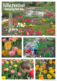 visit tulip festival utah 2015 at thanksgiving point