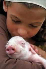 96 best cute piggies images on pinterest animals adorable