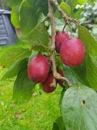 fruit u2013 faithfulwon