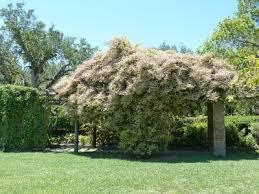 Best Plants For Vertical Garden - garden design garden design with some tips for diy vertical