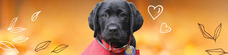 How Do Blind Dogs Know Where To Go Blind Foundation Guide Dogs