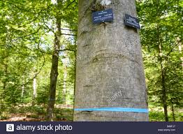 Bad Teinach Forest Graveyard Cemetery Urn Occupancy Places Under Trees Stock