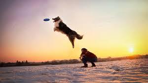 australian shepherd b c winter dogfrisbee training charlie australian shepherd youtube