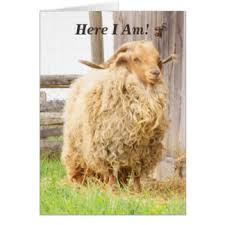 funny farm animals happy birthday cards greeting u0026 photo cards