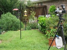 hummingbird camera setup butterfly and wildlife gardening and
