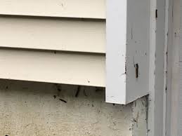 Moths In Kitchen Cabinets Gypsy Moth Caterpillars Growing In Size And Numbers