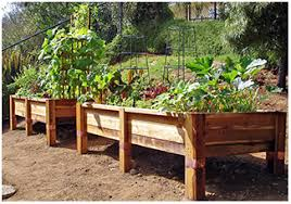 i want to grow a vegetable garden in my backyard i u0027m thinking a